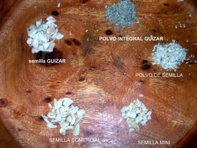 Semilla de brasil big guizar la mejor semilla de Semilla de brasil es toxica