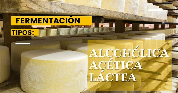 ▷ Tipos de fermentación que existen y qué son (Alcohólica, Acética, Láctea)