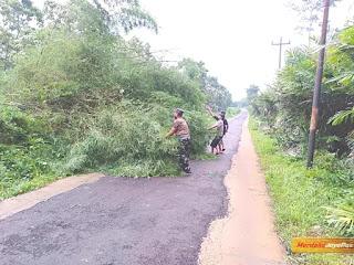 Upaya Babinsa Bersihkan Rumpun Bambu Roboh Dijalan