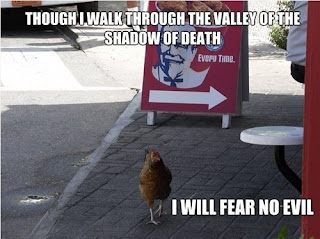 chicken walking outside kfc funny unlucky fired kitten