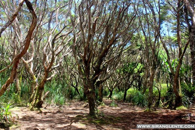 Mt. Hamiguitan Hidden Garden