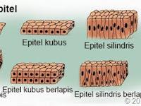 Struktur Jaringan Hewan