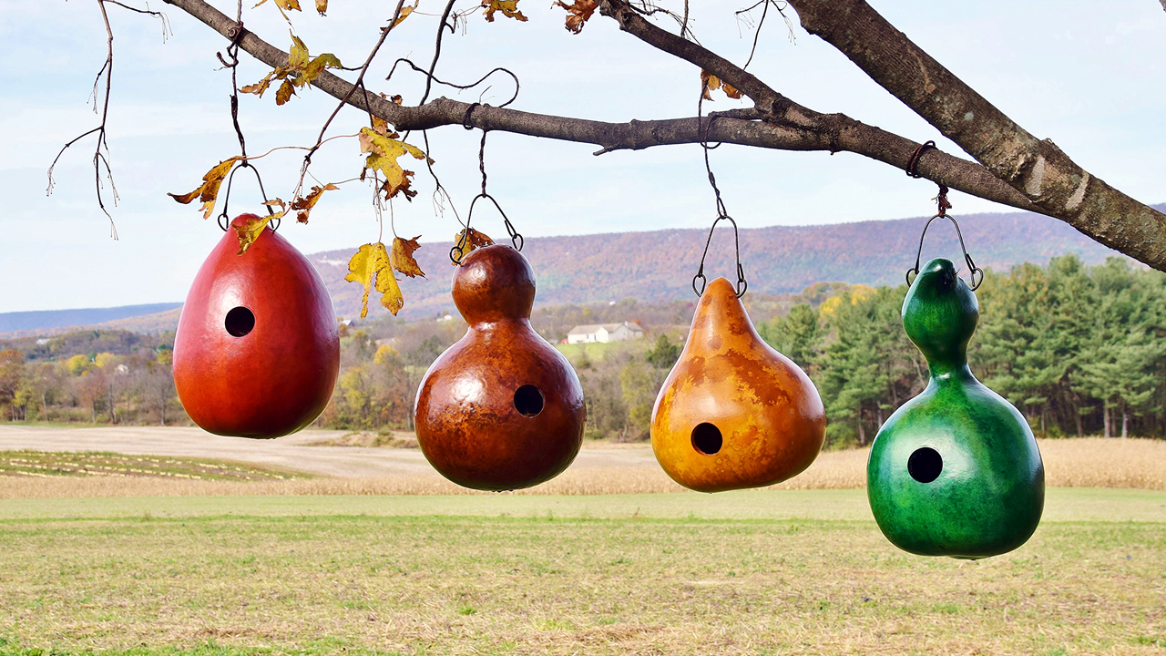 How to Turn a Gourd into a Birdhouse