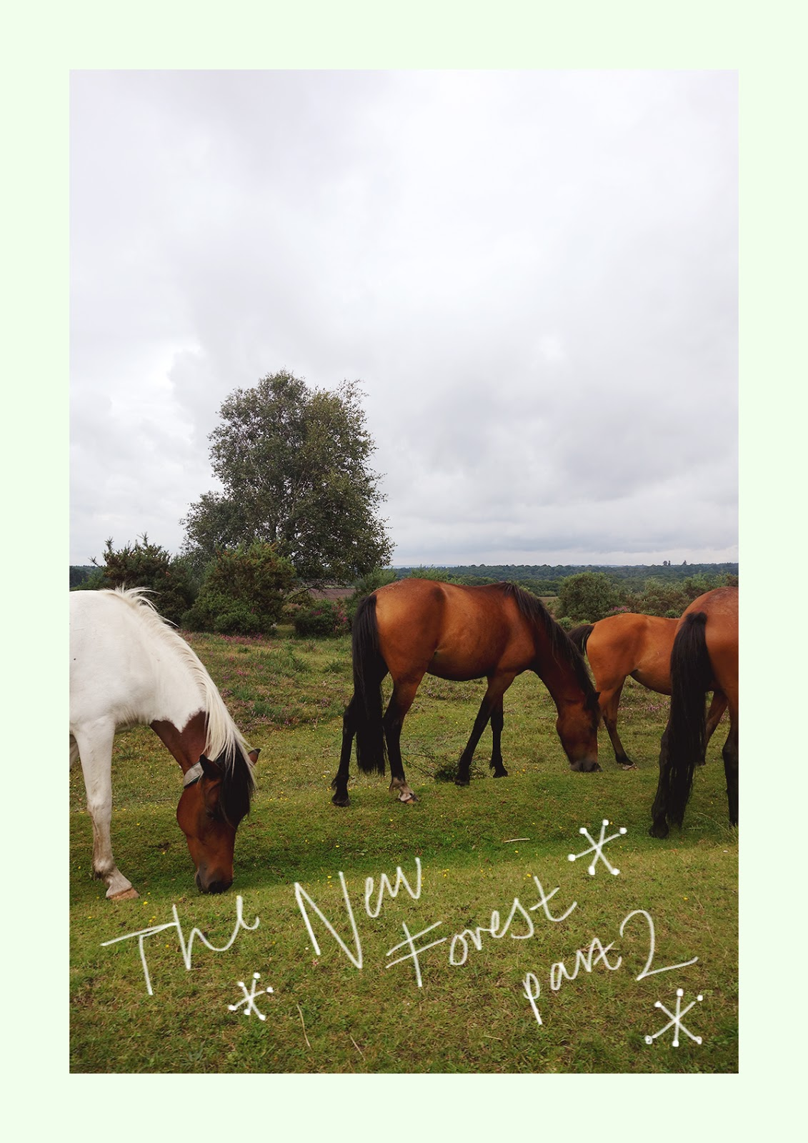 Hello, Hello, Hello! I Have Part Two Of My New Forest Journal For You  Today. If You Are A Fan Of Horses And Greenery Then Blimey Is This The Post  For You!