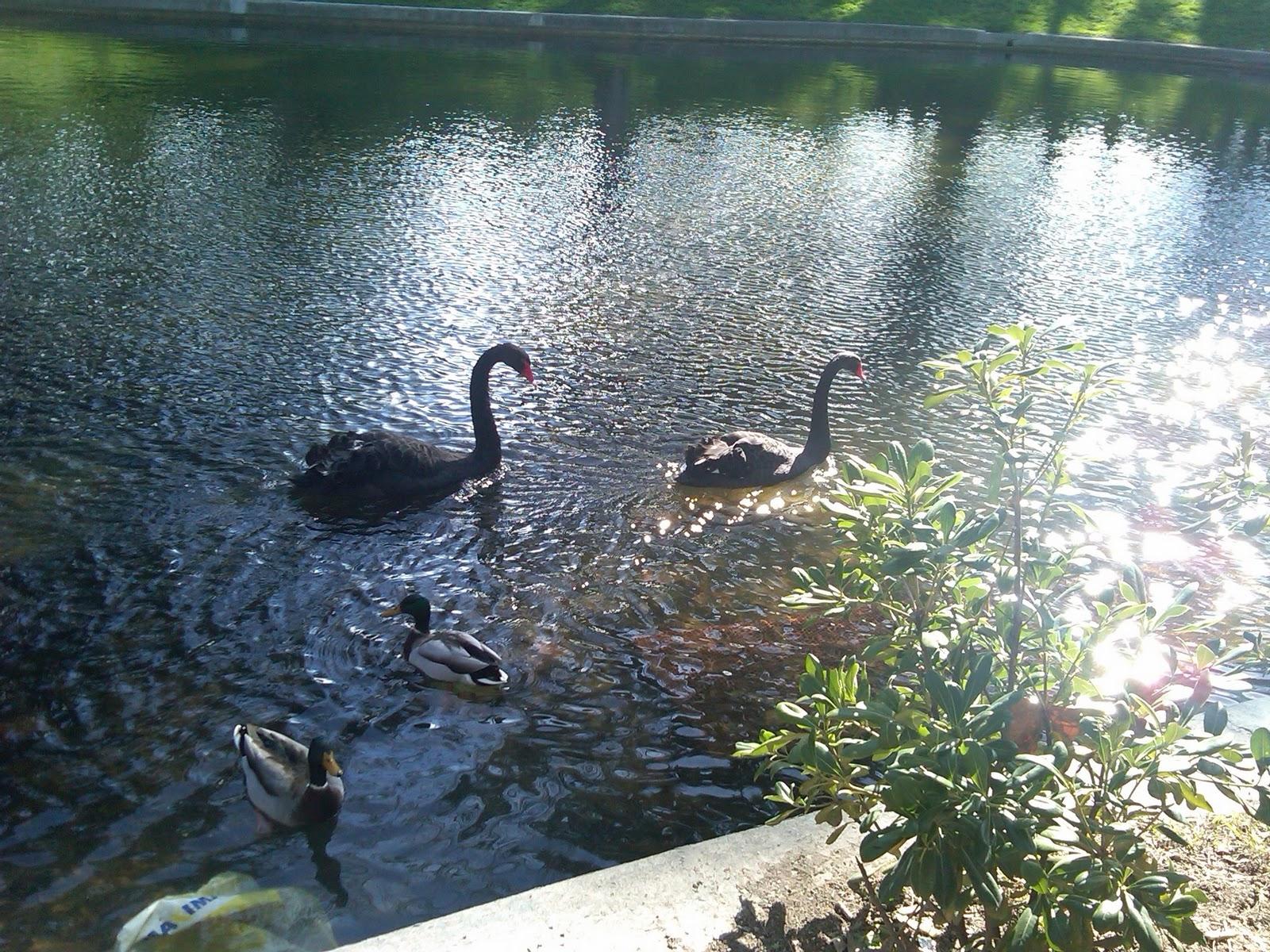 Black swan movie schedule toledo oh