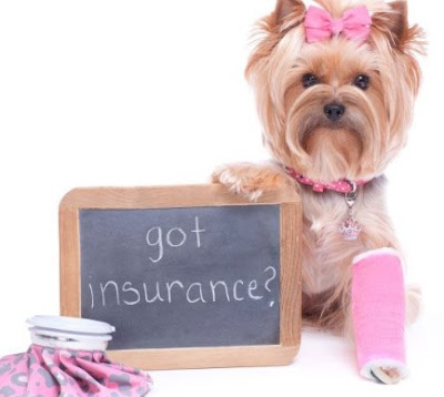 CreditCare for Pets: How Does it Work?
