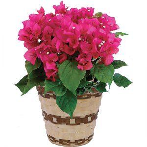 花のある鉢