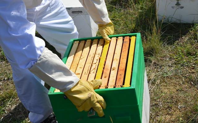 Πότε χρησιμοποιούμε τα χτισμένα πλαίσια; Πως βάζουμε το μέλι και τη γύρη, τι γίνετε αν ξίνισε το μέλι ή μούχλιασε η γύρη;