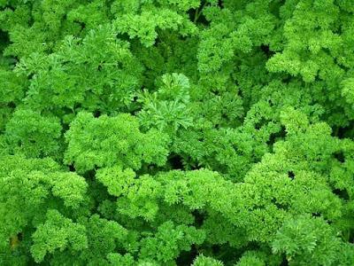 Parsley Vegetable Recipe
