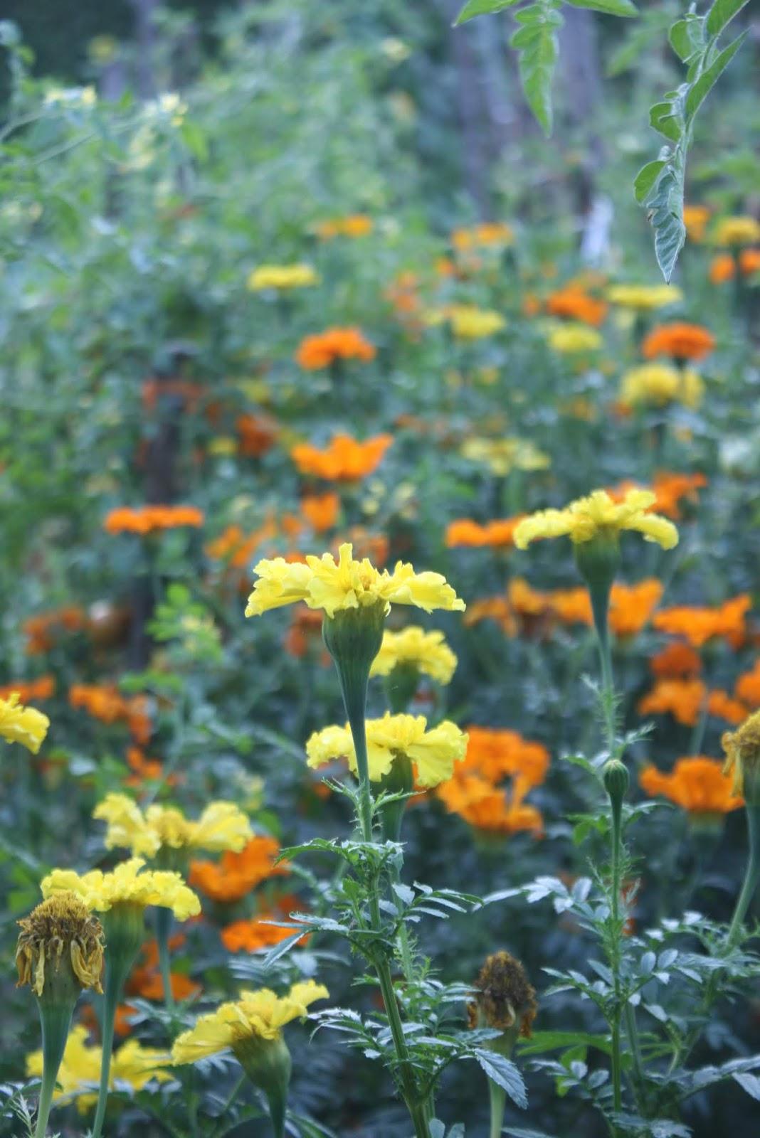ataraxia perennial polyculture trial garden