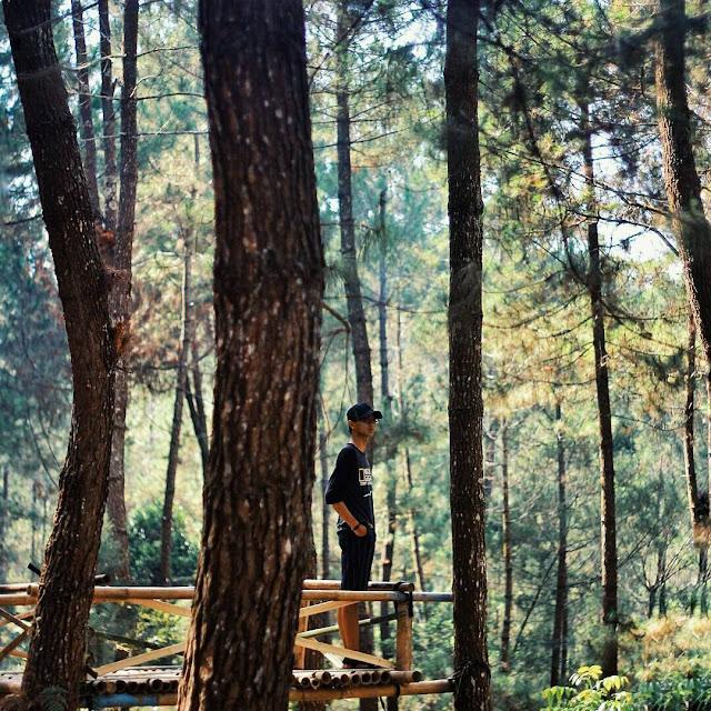 foto rumah pohon di top selfie magelang