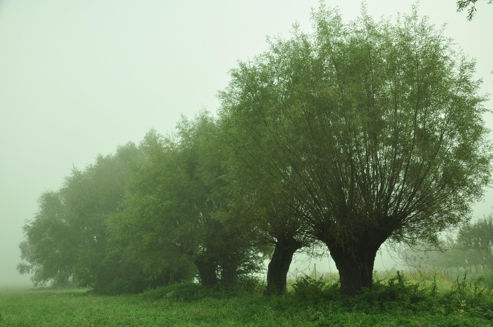 Przez Manowce Rano Mgła W Pole Szła
