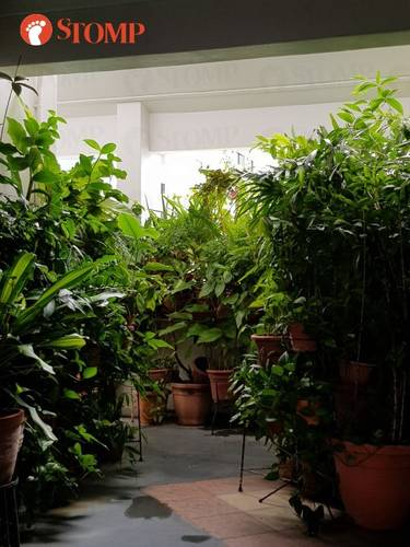 A Pasir Ris-Punggol Town Council spokesman told TNP yesterday that the town council had advised the resident concerned on several occasions to refrain from placing too many potted plants or items in the common areas.