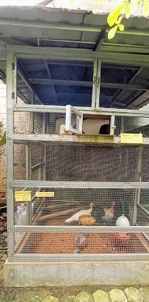 mini zoo semut