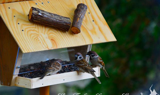 Vogelfutterhaus - selbst gemacht