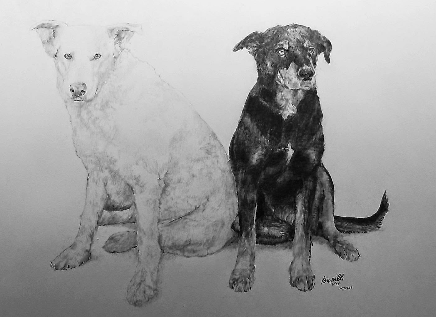 Dog reproduction