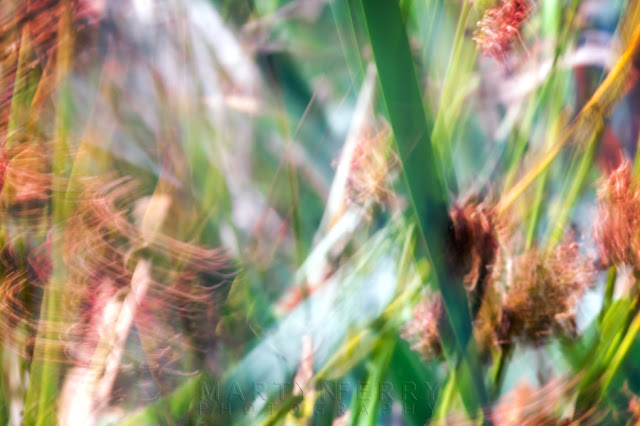 Reeds in a long exposure abstract photo at Ouse Fen Nature Reserve