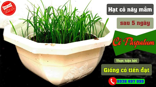 Test hạt cỏ paspalum nãy mầm