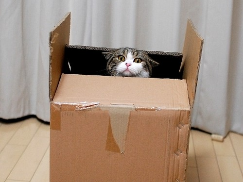 15 Cute Cats In Boxes Amazing Creatures