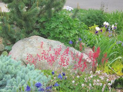 garden, northern Colorado