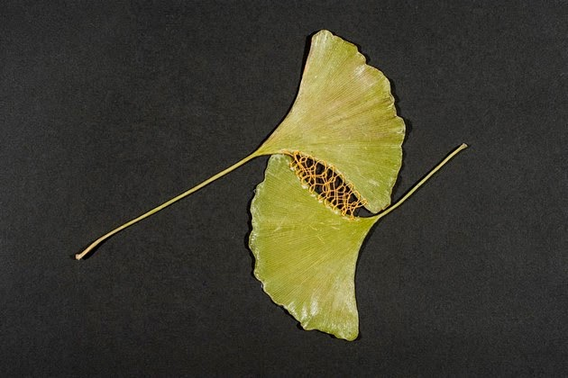 stitched-leaves-1