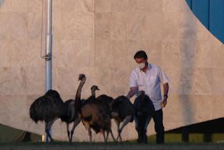 Brazil President Bolsonaro Bitten By Ostrich like Bird during  his Quarantine