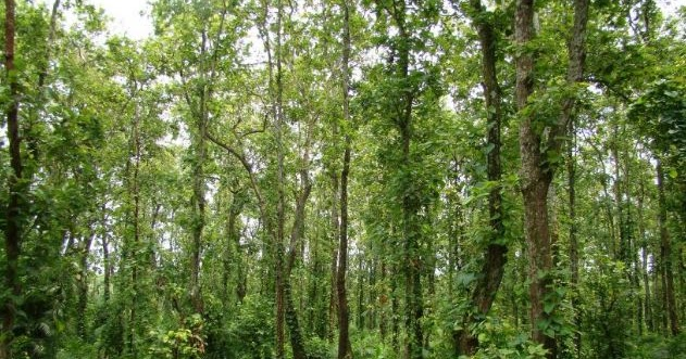 Madhupur National Park Bangladesh Review You Can Visit