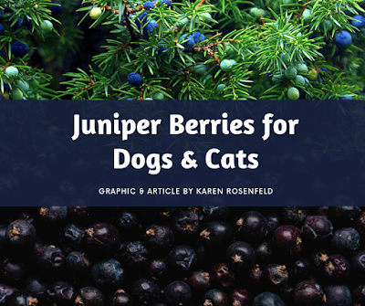 Juniper berries for dogs and cats