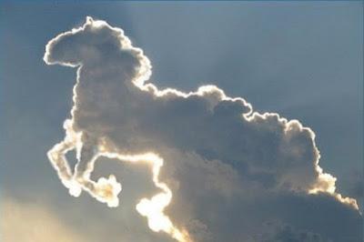 La gestion de la fin de vie des chevaux passera par l'abattoir...