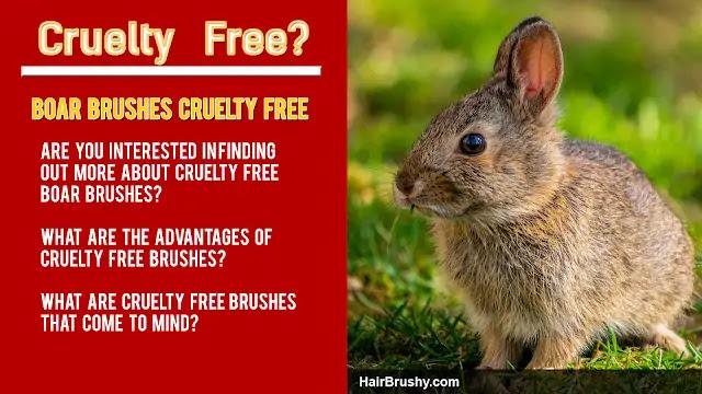 Cruelty free hair brush