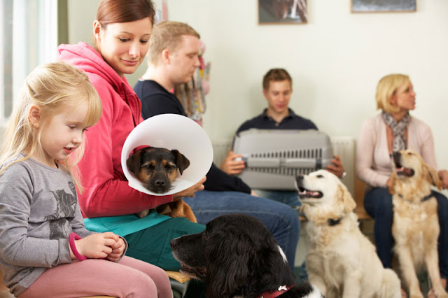 A busy waiting room at the vet  is a stressful experience for dogs