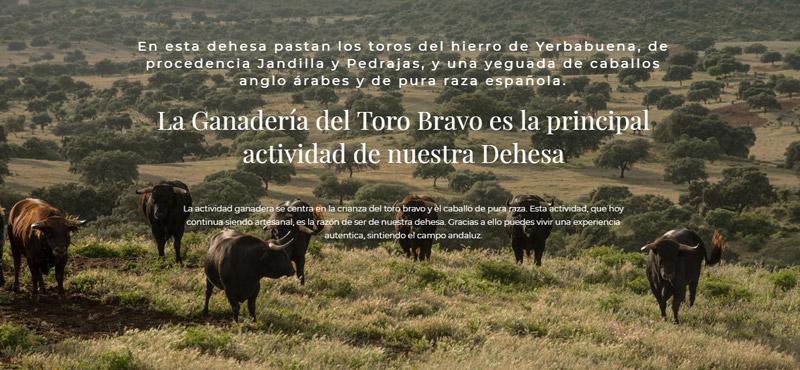 Diseño Web en la Sierra Norte de Sevilla