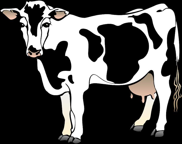 Dibujo - vaca - lechera - pintar - dibujar - vacaslecheras.net