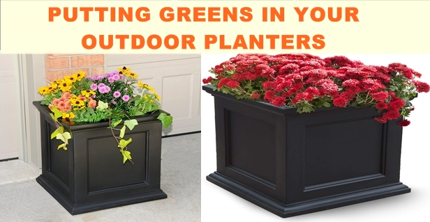 PUTTING GREENS IN YOUR OUTDOOR PLANTERS