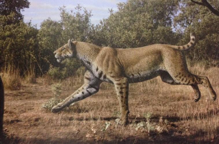 Ilustrasi kucing purba homotherium