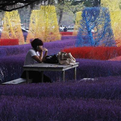 Jardín de colores
