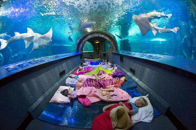 Newport Aquarium (USA)