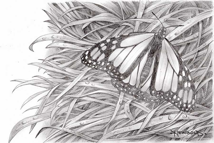Butterfly Egg Drawing