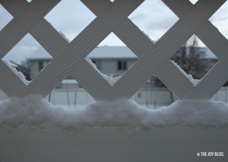 Snow in My Garden // WWW.THEJOYBLOG.NET