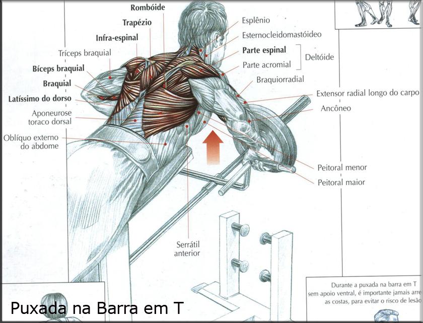 Guia dos Movimentos de Musculação - Frédéric Delavier ...