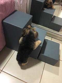 filhotes aprendendo a usar escadas