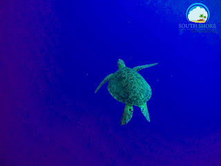 Swim with sea turtles in Moalboal Cebu