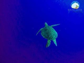Swim with sea turtles in Moalboal Cebu