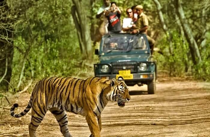 Wildlife Sanctuary of wayanad