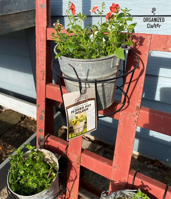 Photo of an orange diascia hanging on an industrial dolly.
