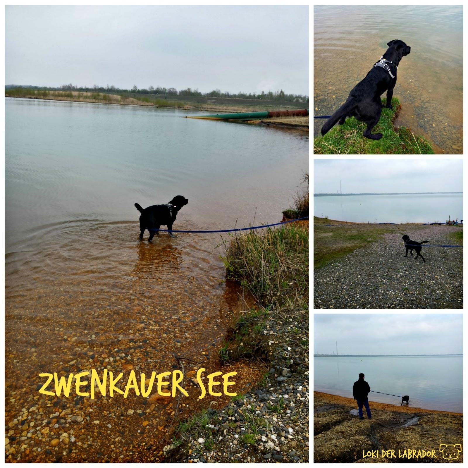 Zwenkauer See Schwarzer Labrador