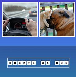 Водить автомобиль и кот за нос собаку взял, водить за нос