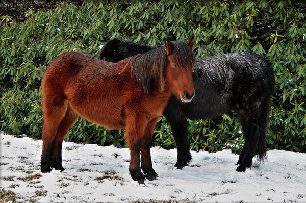 Winter Horses Nice HD Wallpaper Widescreen