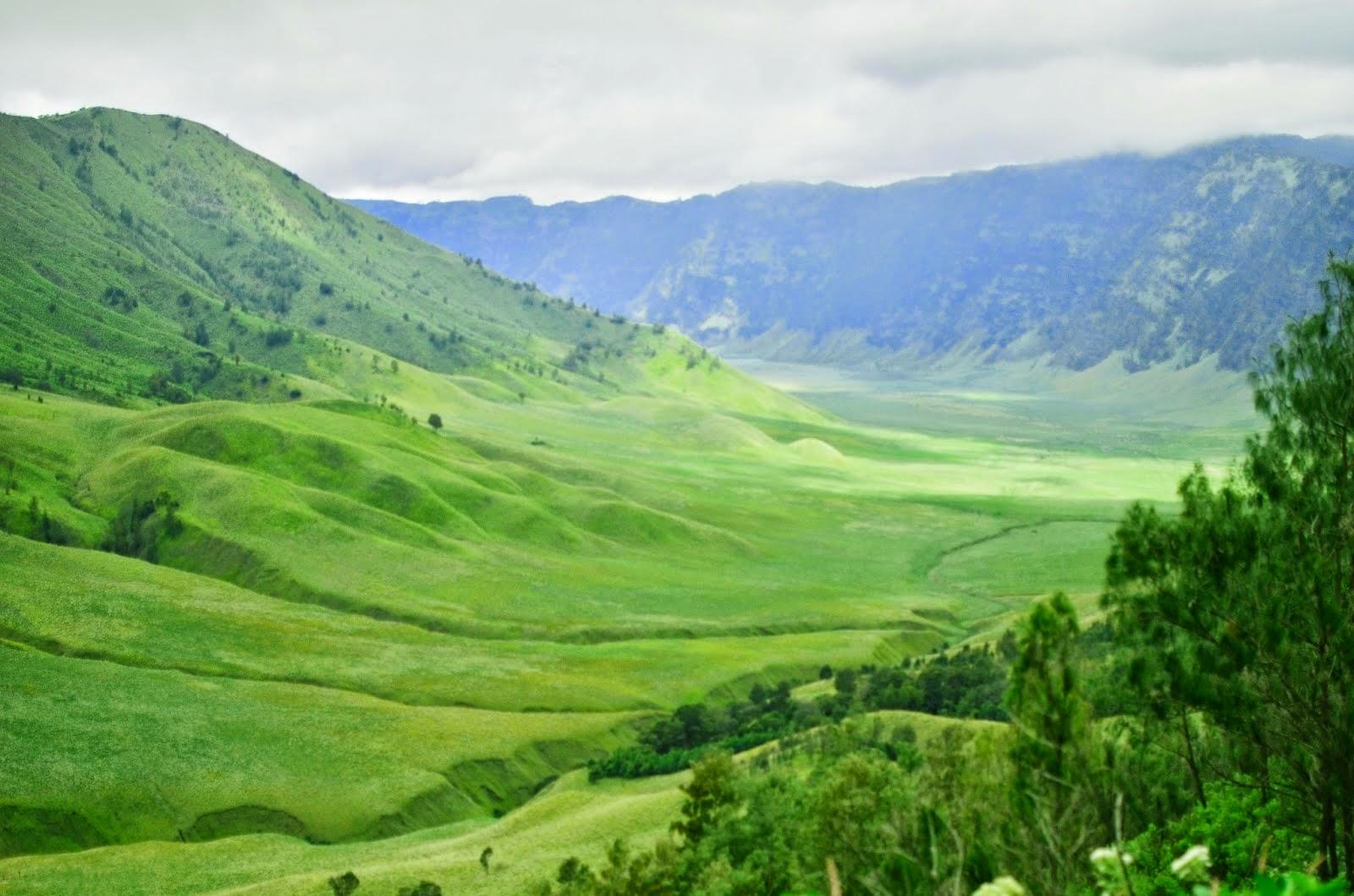 Padang Savana