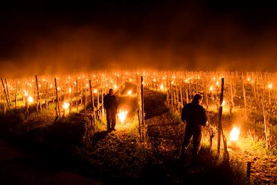 blog vin Beaux-vins comment les vignerons luttent contre le froid vigne